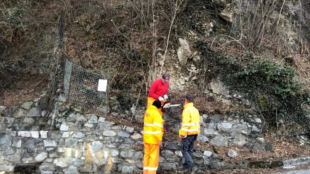 pulizia bosco alpini perledo strada vezio febbraio 2019 (7)-2