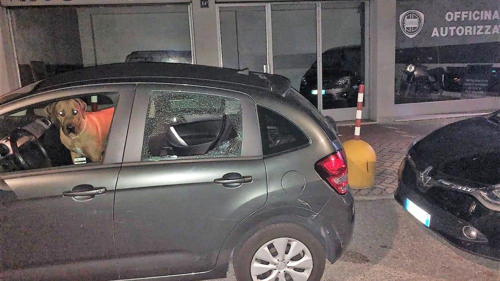 vandalismo auto Linda Olate (2)-2