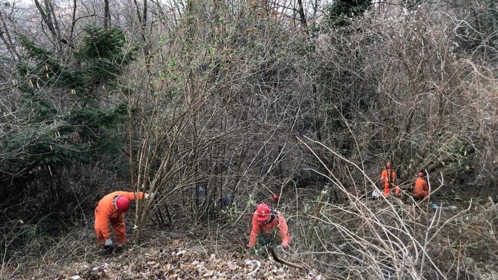 pulizia bosco alpini perledo strada vezio febbraio 2019 (6)-2