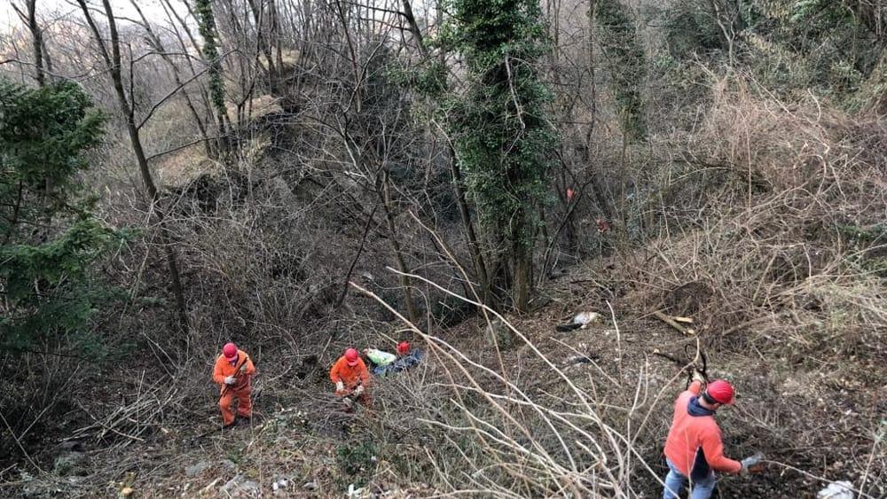 pulizia bosco alpini perledo strada vezio febbraio 2019 (1)-2