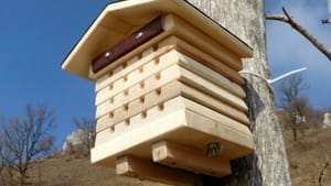beehive_corretta-2