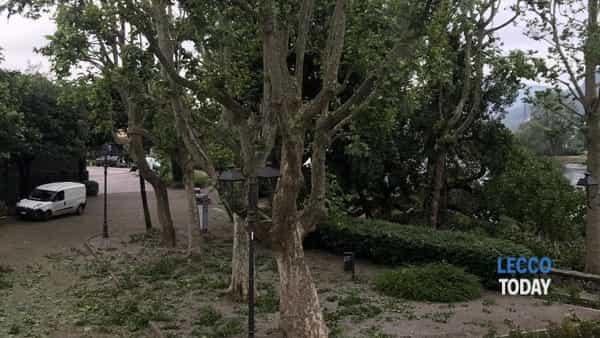 Pianta caduta Pescarenico Piazza Era 11 06 19 (4)