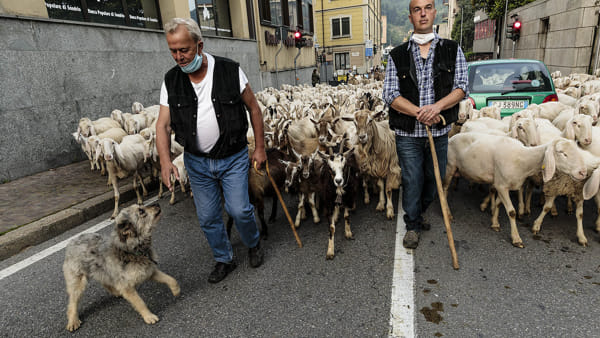 stefano pensotti foto transumanza pecore lecco 23 maggio 20204-2