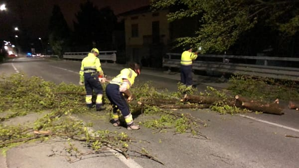 Vento albero crollato Sala-2
