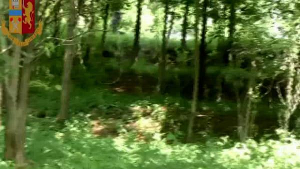 Spaccio di droga nei boschi di Nibionno: la Polizia sequestra la merce e apre un'inchiesta