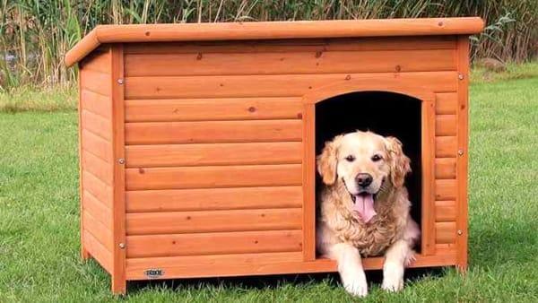 Animali Di Plastica Da Giardino.Cucce Per Cani Da Esterno Guida All Acquisto