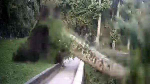 Crolla pianta secolare all'Orrido di Bellano: il video