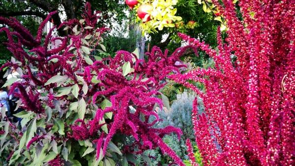 orto botanico valmadrera1-2
