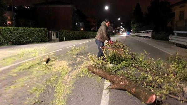 Aldo taglio alberi-2