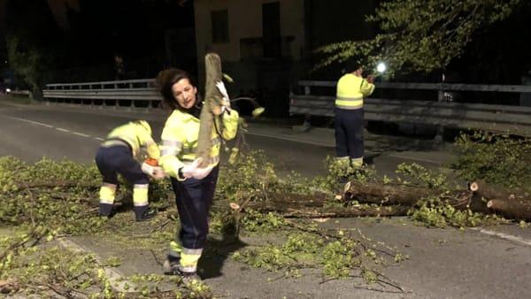 Rimozione albero Cristina Valsecchi-2-2